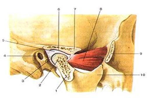 Челюсть суставная сумка мази кремы от боли в суставах