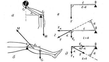 Механические свойства костей и суставов суставы лечение подорожник
